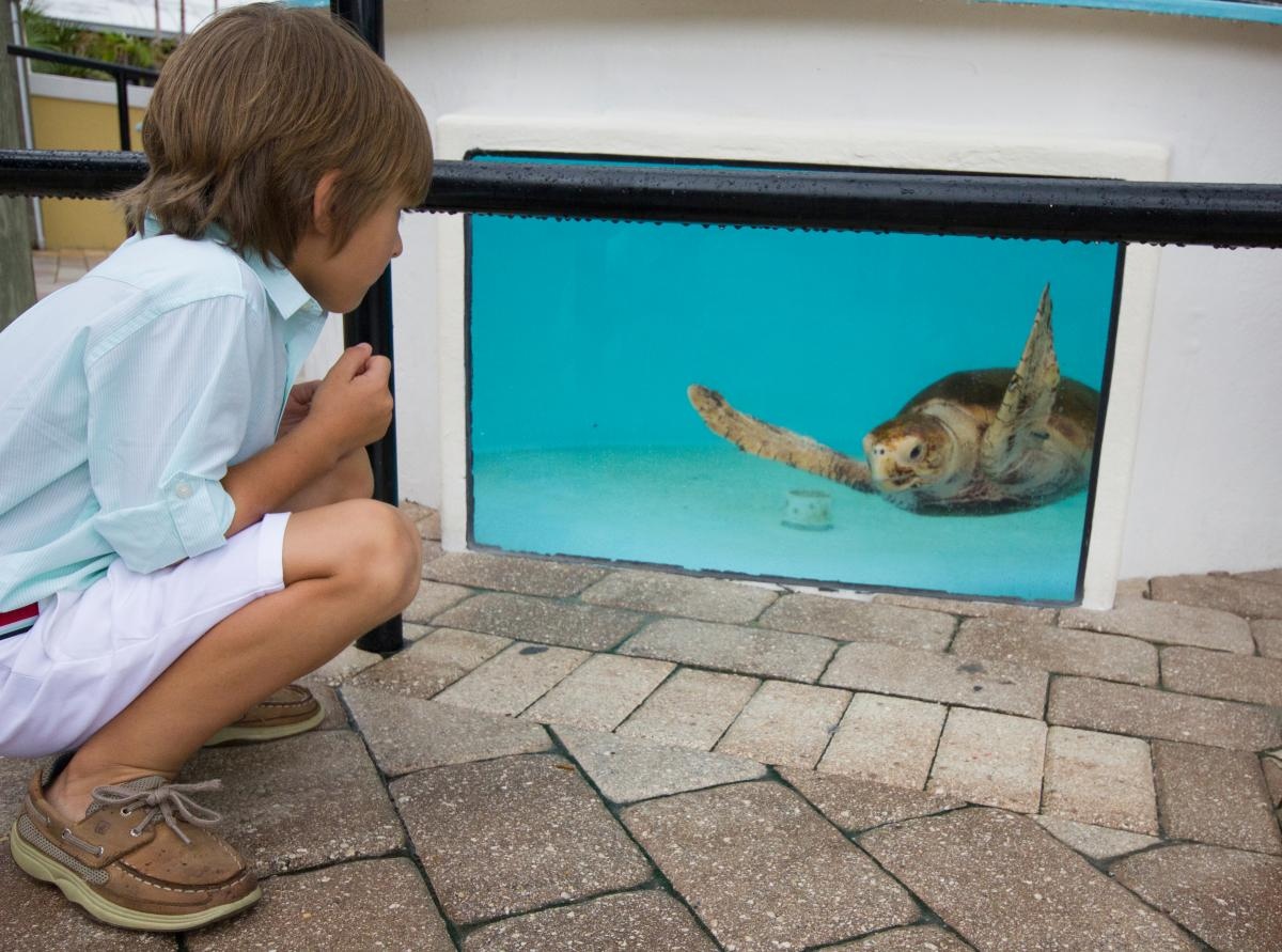 Interaction des tortues marines au Loggerhead Marinelife Center