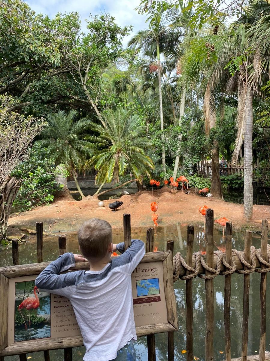 Palm Beach Zoo flamingo exhibit