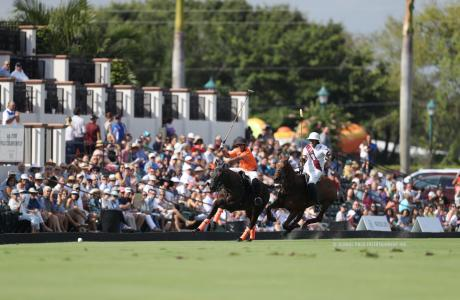 Polo horses in action at a Polo match