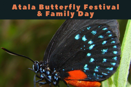 ATALA BUTTERFLY FESTIVAL & FAMILY DAY