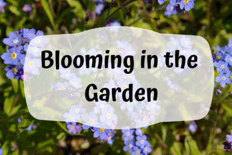 Blooming in the Garden