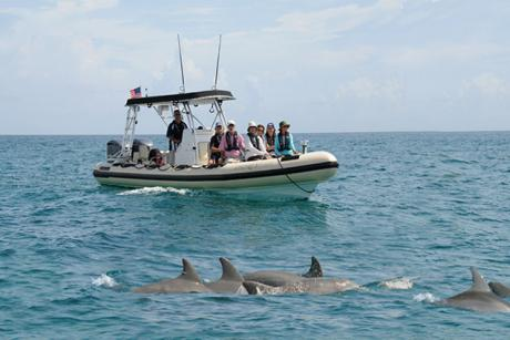 Tour boat in proximity of wild dolphin