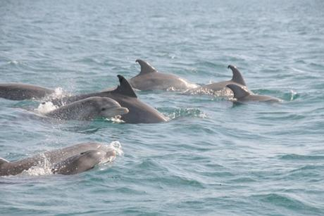 Start 2021 with an Incredible Dolphin Tour Adventure
