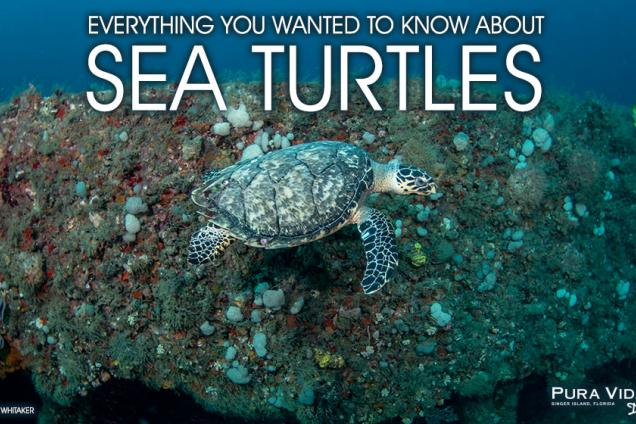 All About Sea Turtles!