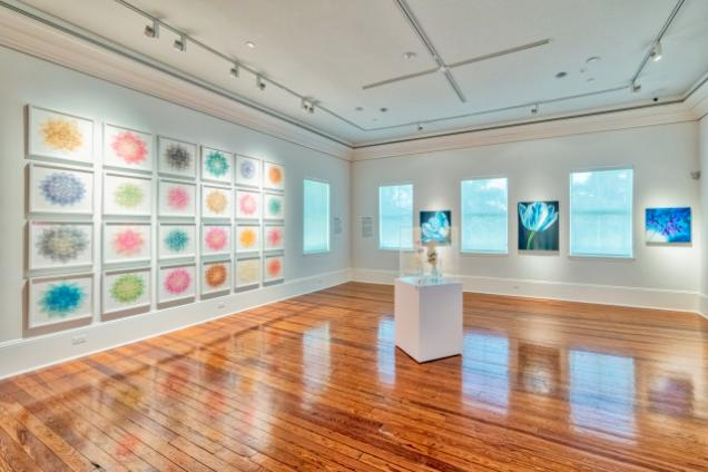 Cornell Art Museum - Gallery View, Flora Exhibition 2018