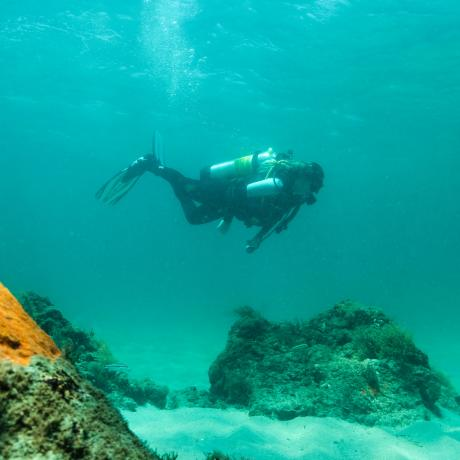 Underwater Diver in The Palm Beaches