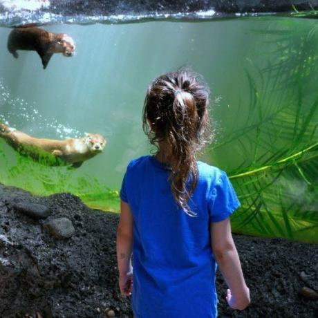Young girl look at otters at the zoo