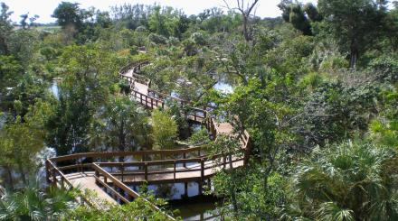 Aerial view of Daggerwing Nature Center boardwalk