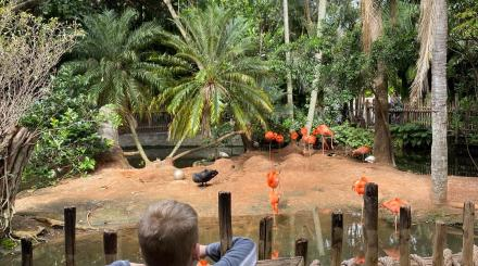 The flamingo exhibit at the Palm Beach Zoo