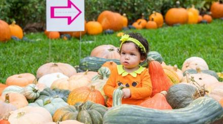 Baby sitting in pumpkins and gourds