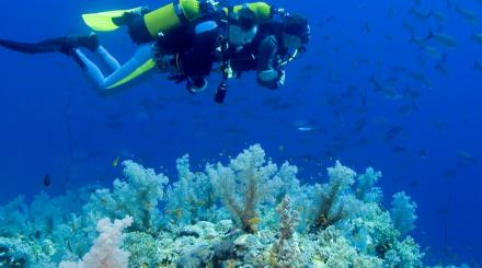 Two divers on a reef
