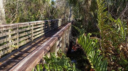 Cypress swamp boardwalk at Frenchman's Forest