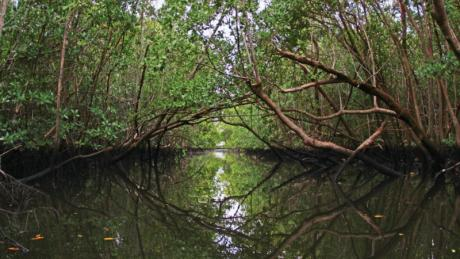 Mangove trees in Lake Worth Lagoon