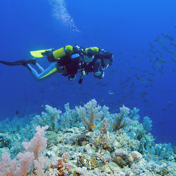 Scuba Diving Sites The Palm Beaches