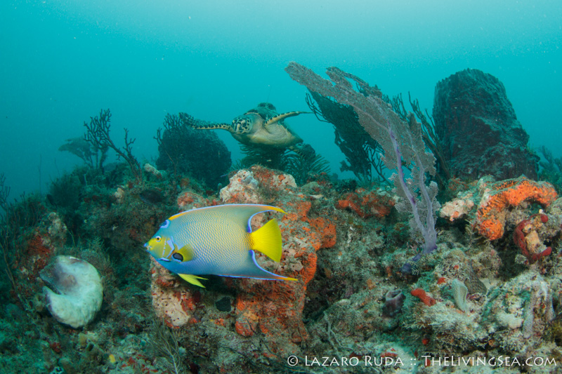 A Divers Paradise Discover The Palm Beaches