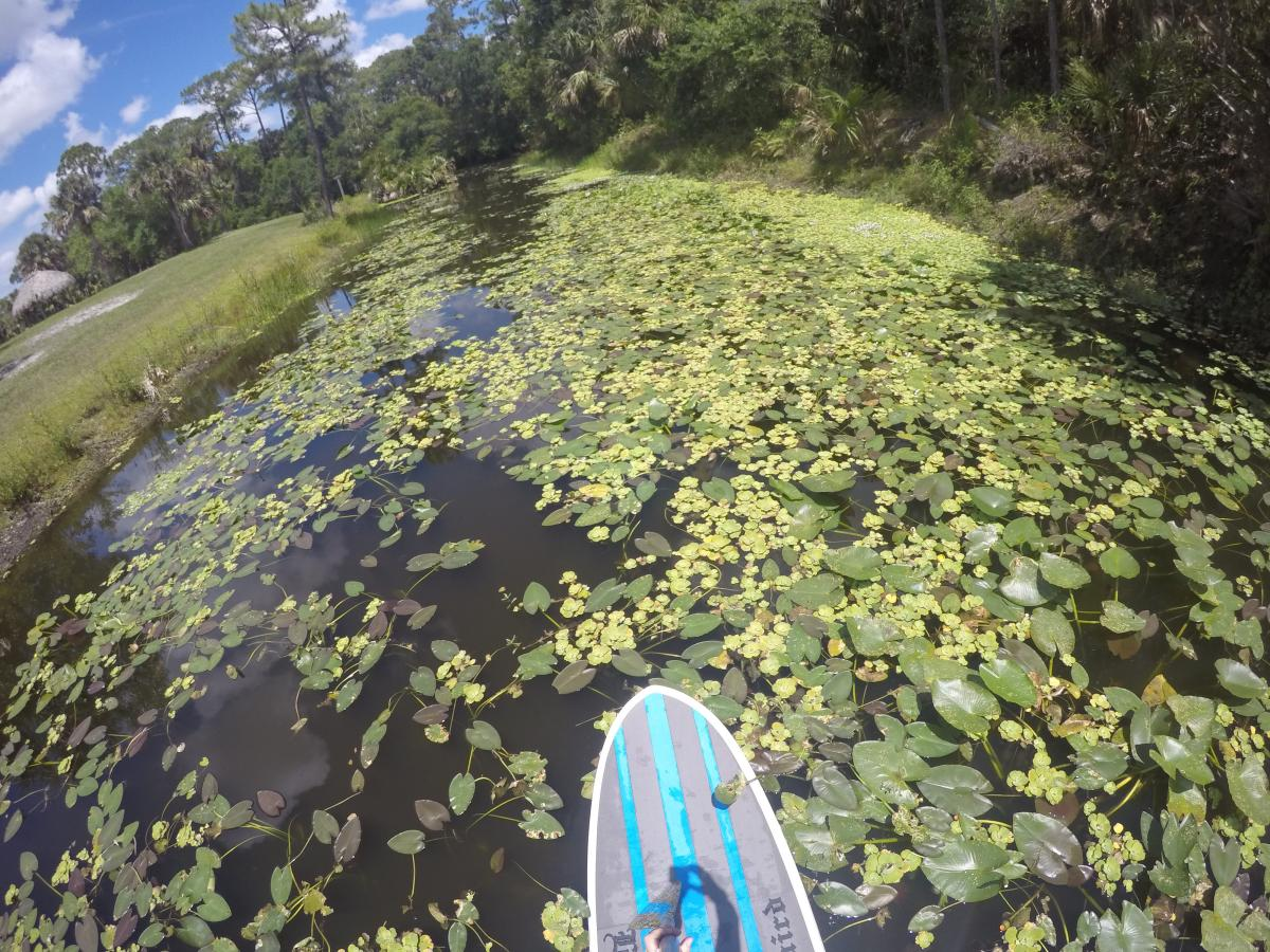 Paddleboarding nature in The Palm Beaches | The Palm Beaches Florida