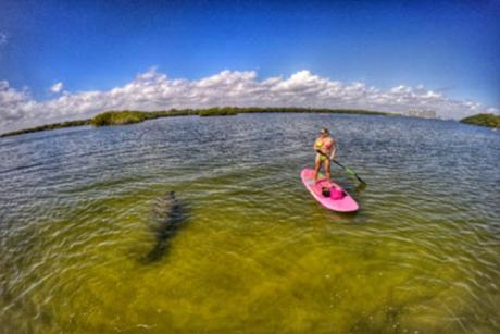 Pink in the Sunshine Two-Hour Paddleboard Rental