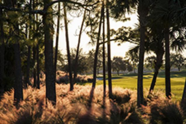 PGA National Champion Course 4th Trees