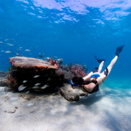 Free Diving the Snorkel Trail